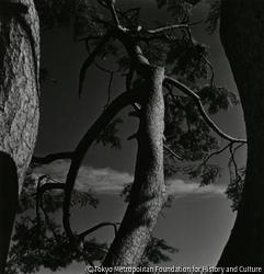 作品画像:(樹木)