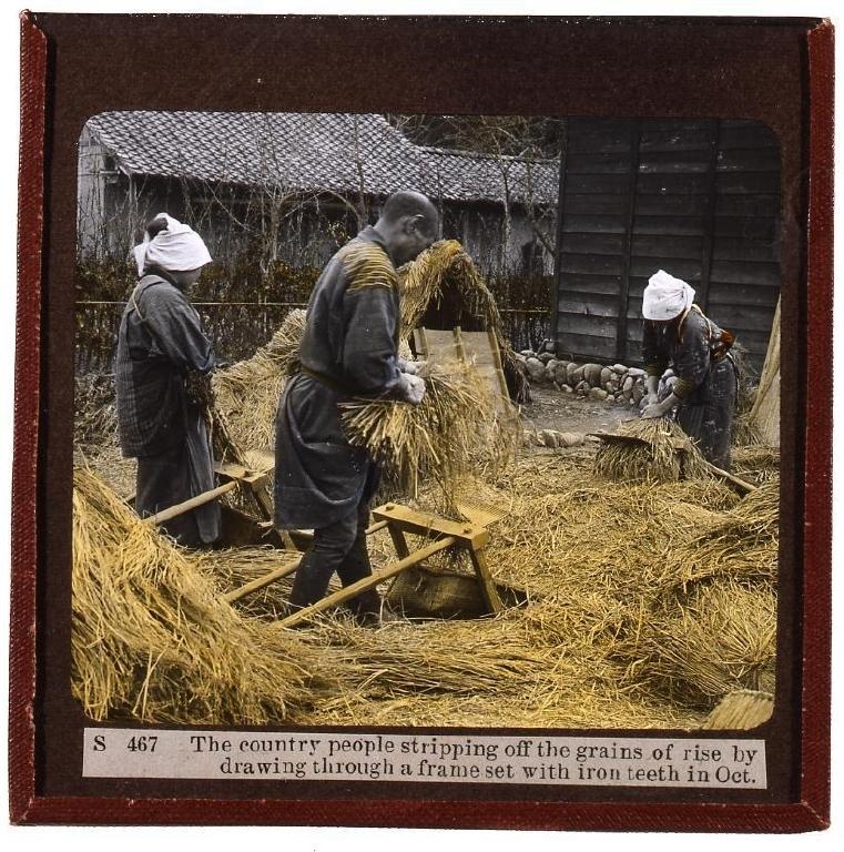 作品画像:脱穀作業