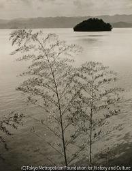 作品画像:若狭 大島風景