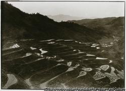 作品画像:寛文9年に開田された畑野村の千枚田は山の斜面に小さな段々畑。田ごとに月が
