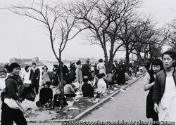 作品画像:早すぎるお花見 東京 隅田公園