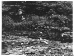 作品画像:睡蓮のある池