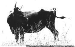 作品画像:牛