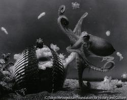 作品画像:イイダコの孵化 江ノ島水族館