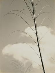 作品画像:(竹と雲)