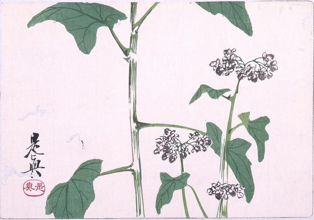 作品画像:多色刷版 蕎麦の花
