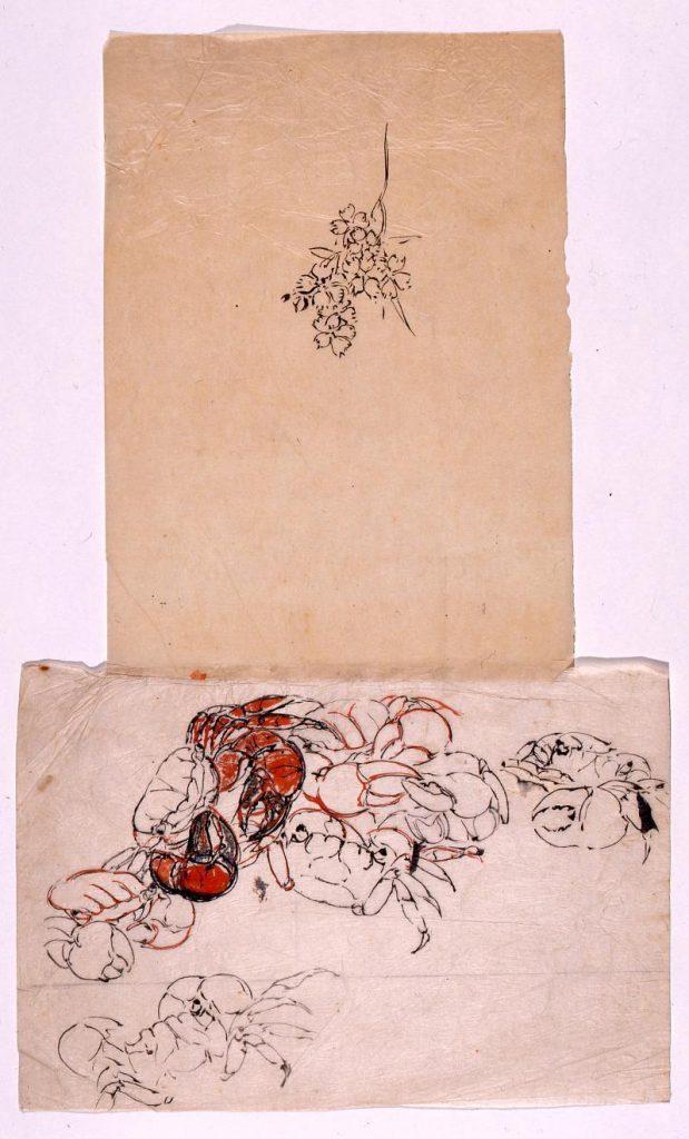 作品画像:下絵 蟹,花