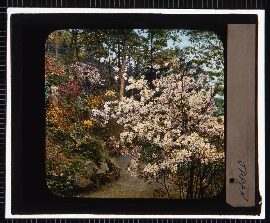 作品画像:花の咲く小道(幻燈原板)