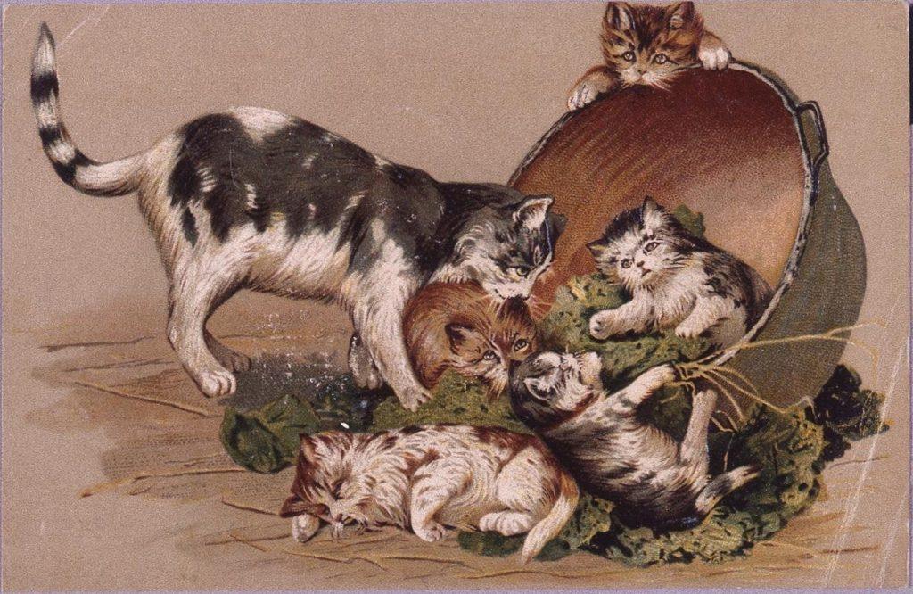 作品画像:外国製絵葉書 猫と鍋