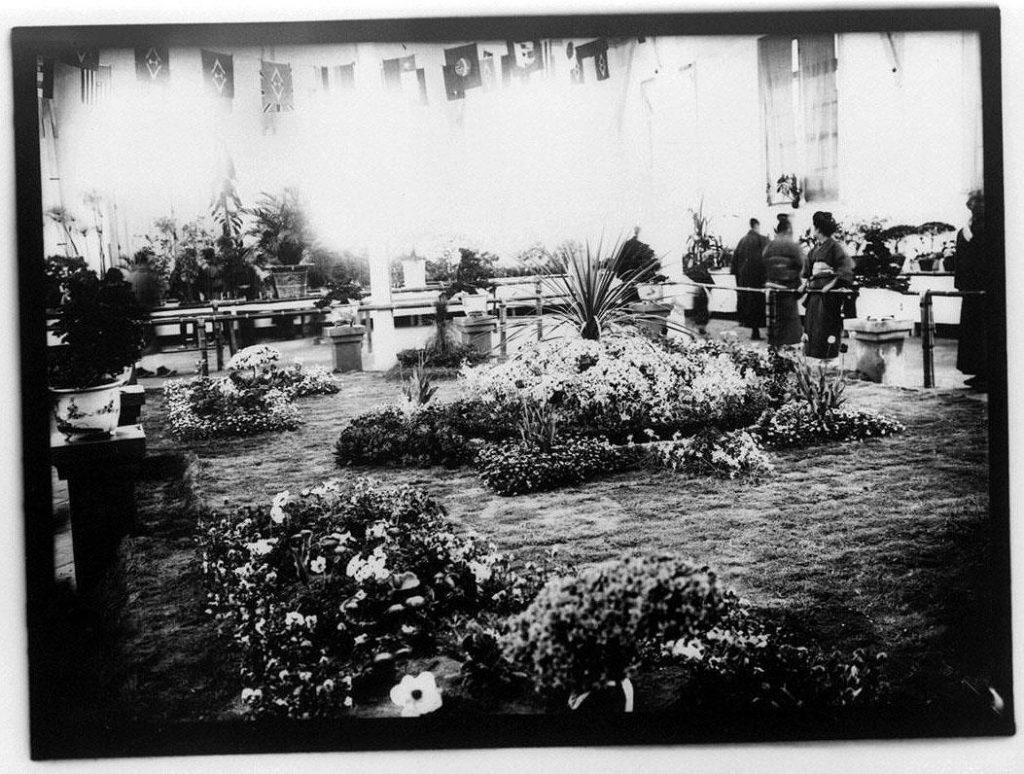 作品画像:植物の展覧会