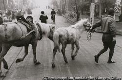 作品画像:安川をゆく馬