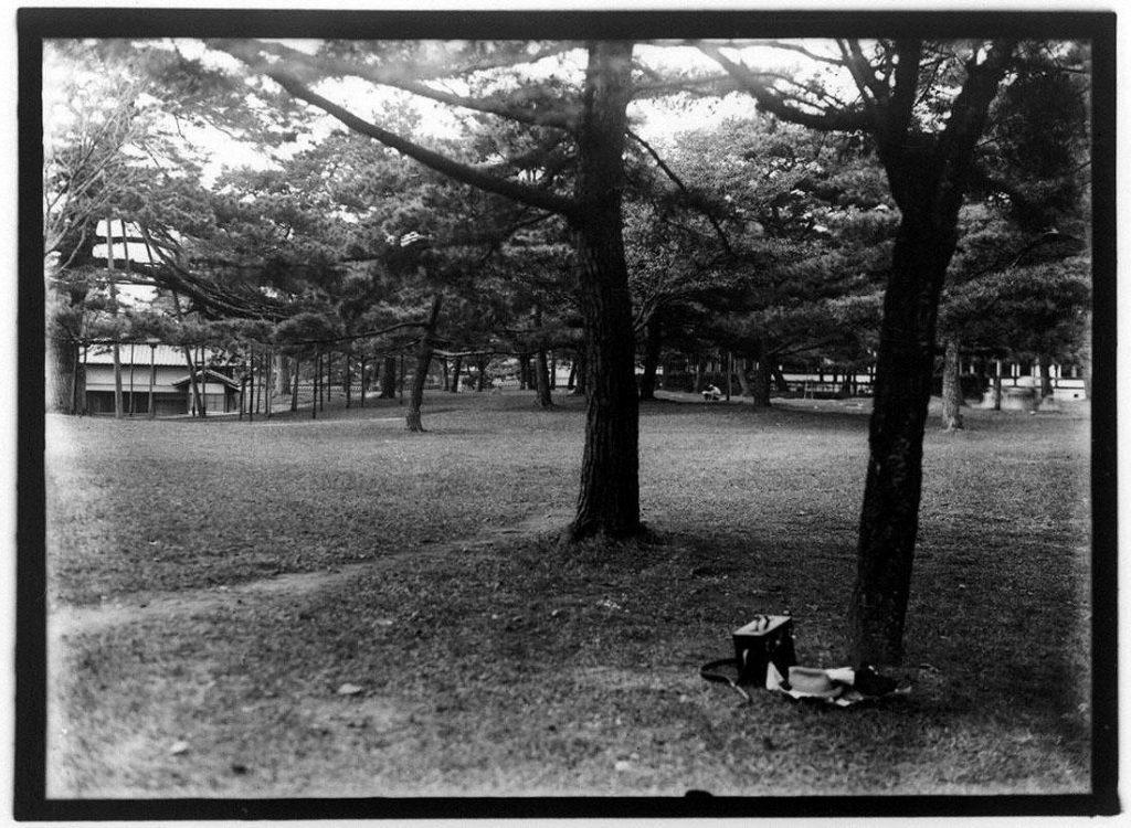 作品画像:樹木