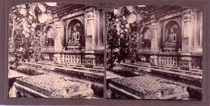 仏像と菩提樹(No.187)