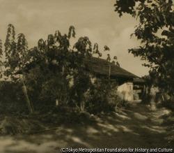 作品画像:(家と樹木のある風景)