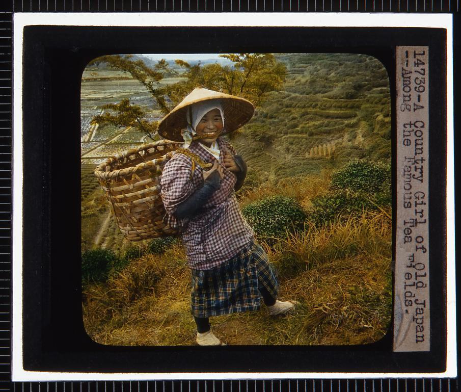 作品画像:茶畑の女性(幻燈原板)