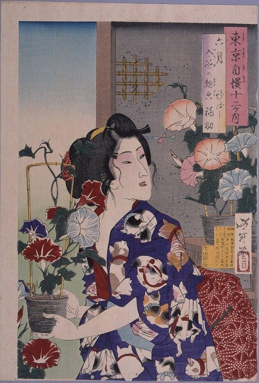 作品画像:東京自慢十二ヶ月 六月 入谷の朝顔