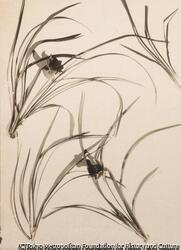作品画像:ランの花の光と影