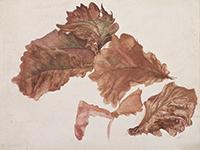 作品画像:柏の葉