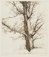 樹木 ルドンの素描による