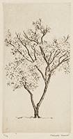 作品画像:一樹