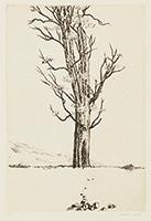 作品画像:樹(『鵜原抄』フロントピース)