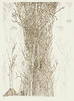 作品画像:大きな樹