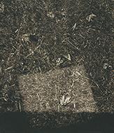 作品画像:転位 '82-地-Ⅱ(秋)