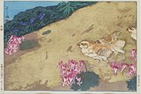 作品画像:雷鳥とこま草[『日本アルプス十二題』より]
