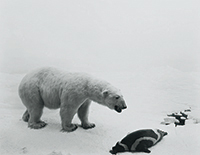 作品画像:Polar Bear