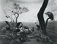 作品画像:Hyena-Jackal-Vulture