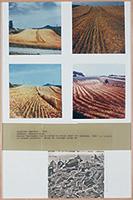 作品画像:管理された収穫
