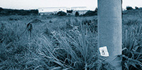 作品画像:地蔵建立 上九一色村、1995年8月10日