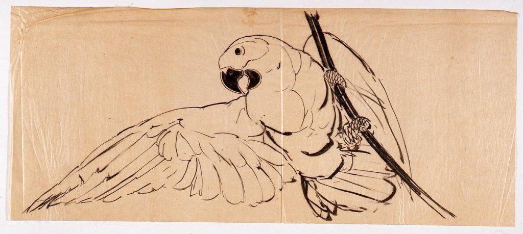 作品画像:下絵 鸚鵡