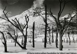 作品画像:大正池の枯れ木と焼岳