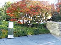 作品画像:東京のウィッシュ・ツリー(願かけの木)