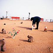 作品画像:贈り物:猿のための展覧会