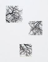作品画像:樹の空間から Ⅶ