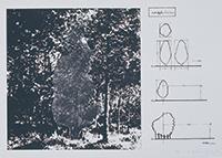 Cut off plan (The Tree)