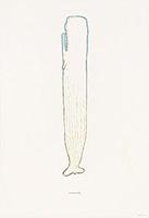 作品画像:青い白鯨