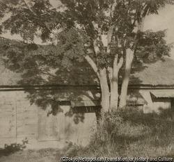 作品画像:木と家