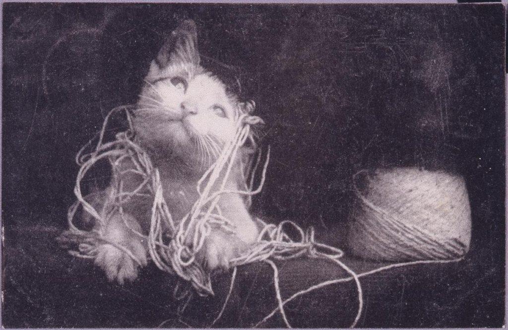 作品画像:麻紐で遊ぶ猫