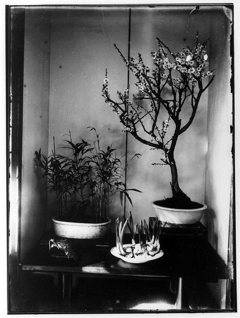作品画像:植物3種(梅花・笹・球根)