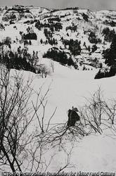 作品画像:若木迎え シン木を運ぶ