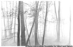 作品画像:霧の雑木林