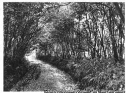 作品画像:秋の道