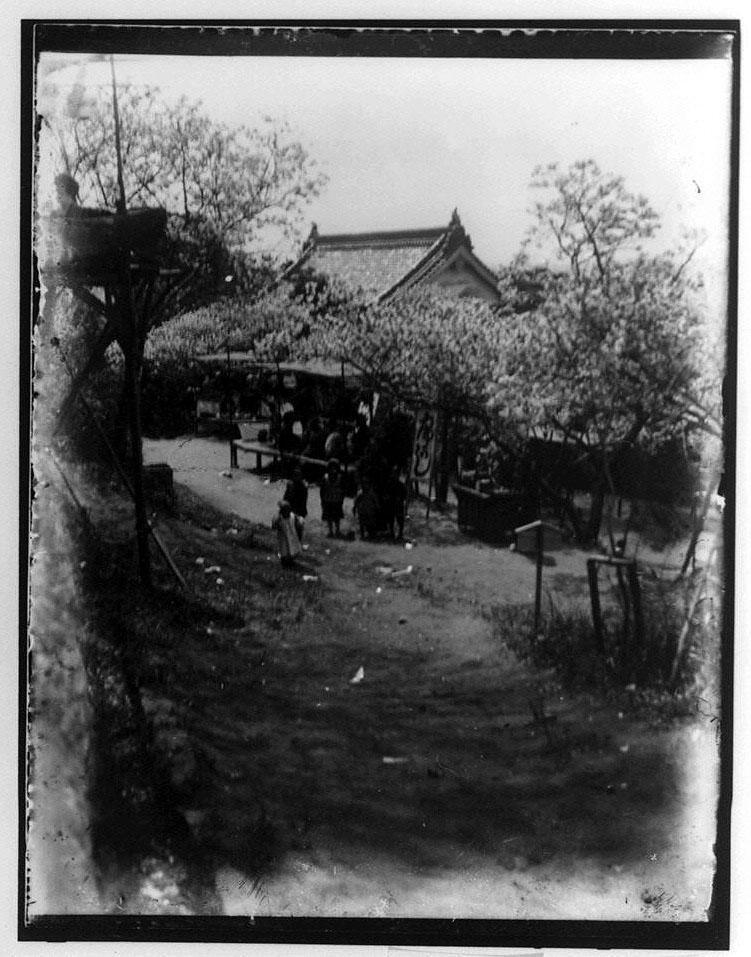 作品画像:桜の下の子供たち