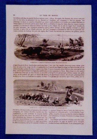 作品画像:アンベール「幕末日本図絵」挿絵 代かき,田植,日本の鳥