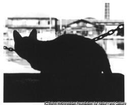 作品画像:猫