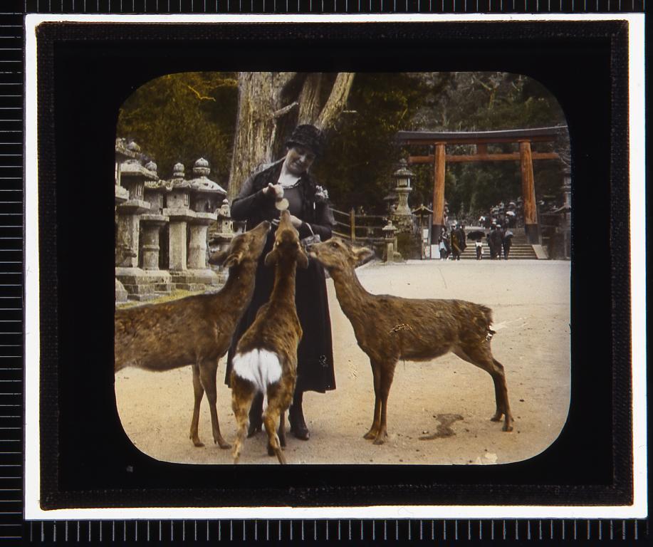 作品画像:奈良 春日大社二宮鳥居(幻燈原板)
