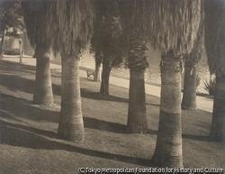 作品画像:木の影